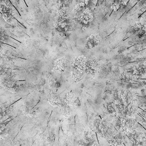 abstract aerial photography - aerial nature landscape - Snow in the forest Grunewald