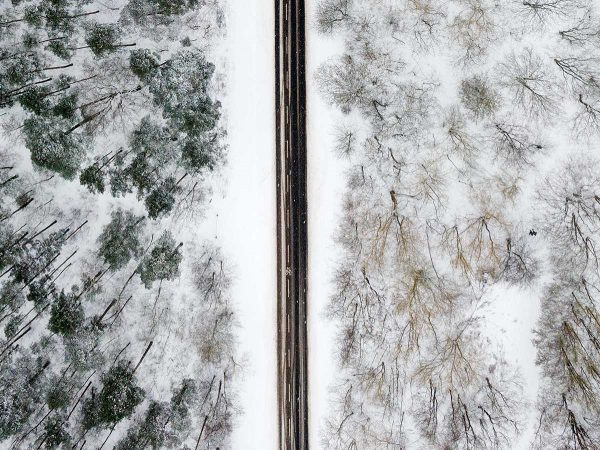 Road through the snowy forest of Grunewald